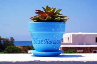 blueharmony20